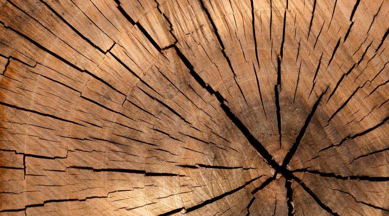 Wilgotność drewna do kominka